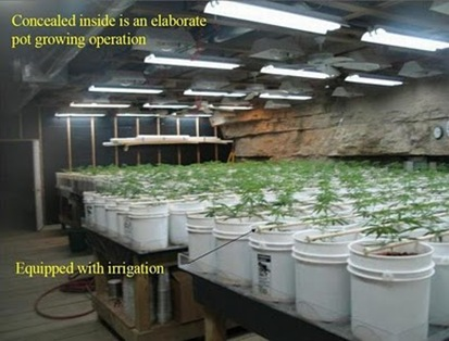 elaborate_pot_growing_operation_04