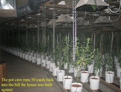 elaborate_pot_growing_operation_05