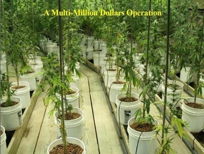 elaborate_pot_growing_operation_07