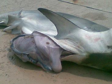shark_02
