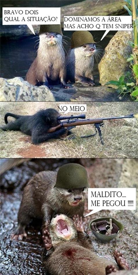 tiro-1